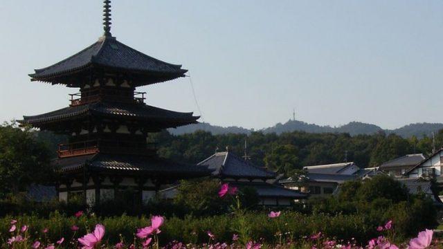 法起寺とコスモス