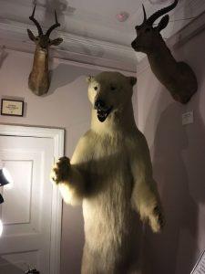 ベンの家 白クマの剥製