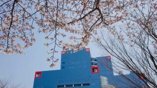 扇町公園の桜と関西テレビ